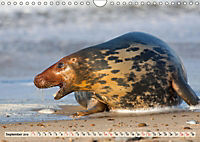 THE GREY SEALS OF HORSEY BEACH (Wall Calendar 2019 DIN A4 Landscape) - Produktdetailbild 9