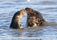 THE GREY SEALS OF HORSEY BEACH (Wall Calendar 2019 DIN A4 Landscape) - Produktdetailbild 2