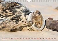 THE GREY SEALS OF HORSEY BEACH (Wall Calendar 2019 DIN A4 Landscape) - Produktdetailbild 1