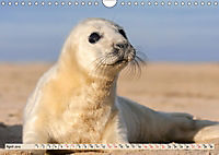 THE GREY SEALS OF HORSEY BEACH (Wall Calendar 2019 DIN A4 Landscape) - Produktdetailbild 4