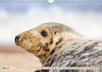 THE GREY SEALS OF HORSEY BEACH (Wall Calendar 2019 DIN A4 Landscape) - Produktdetailbild 5