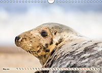THE GREY SEALS OF HORSEY BEACH (Wall Calendar 2019 DIN A4 Landscape) - Produktdetailbild 5