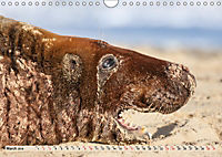 THE GREY SEALS OF HORSEY BEACH (Wall Calendar 2019 DIN A4 Landscape) - Produktdetailbild 3