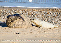 THE GREY SEALS OF HORSEY BEACH (Wall Calendar 2019 DIN A4 Landscape) - Produktdetailbild 10
