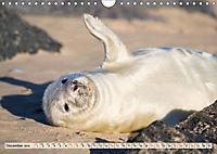 THE GREY SEALS OF HORSEY BEACH (Wall Calendar 2019 DIN A4 Landscape) - Produktdetailbild 12