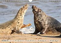 THE GREY SEALS OF HORSEY BEACH (Wall Calendar 2019 DIN A4 Landscape) - Produktdetailbild 11