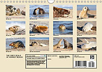 THE GREY SEALS OF HORSEY BEACH (Wall Calendar 2019 DIN A4 Landscape) - Produktdetailbild 13