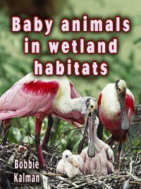 The Habitats of Baby Animals: Baby Animals In Wetland Habitats, Bobbie Kalman