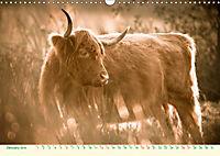 The Hairy Cow Calendar (Wall Calendar 2019 DIN A3 Landscape) - Produktdetailbild 1