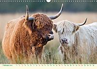 The Hairy Cow Calendar (Wall Calendar 2019 DIN A3 Landscape) - Produktdetailbild 2