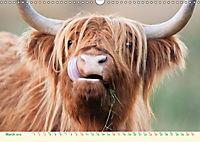The Hairy Cow Calendar (Wall Calendar 2019 DIN A3 Landscape) - Produktdetailbild 3
