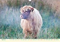 The Hairy Cow Calendar (Wall Calendar 2019 DIN A3 Landscape) - Produktdetailbild 4