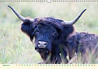 The Hairy Cow Calendar (Wall Calendar 2019 DIN A3 Landscape) - Produktdetailbild 6