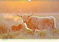The Hairy Cow Calendar (Wall Calendar 2019 DIN A3 Landscape) - Produktdetailbild 9