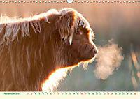 The Hairy Cow Calendar (Wall Calendar 2019 DIN A3 Landscape) - Produktdetailbild 11
