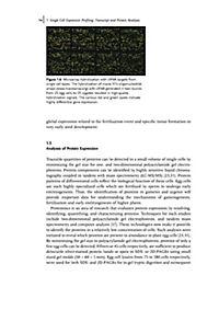 The Handbook of Plant Functional Genomics - Produktdetailbild 10