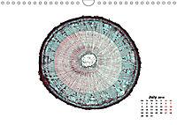 THE MICROSCOPIC WORLD OF PLANTS (Wall Calendar 2019 DIN A4 Landscape) - Produktdetailbild 7