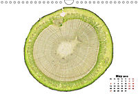 THE MICROSCOPIC WORLD OF PLANTS (Wall Calendar 2019 DIN A4 Landscape) - Produktdetailbild 5