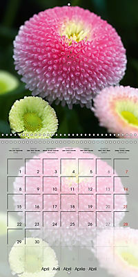 The Pink Garden (Wall Calendar 2019 300 × 300 mm Square) - Produktdetailbild 4