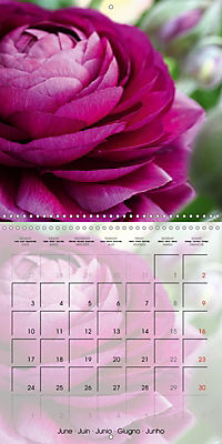 The Pink Garden (Wall Calendar 2019 300 × 300 mm Square) - Produktdetailbild 6