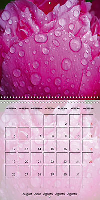 The Pink Garden (Wall Calendar 2019 300 × 300 mm Square) - Produktdetailbild 8