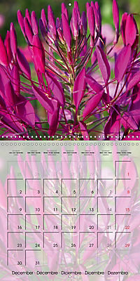 The Pink Garden (Wall Calendar 2019 300 × 300 mm Square) - Produktdetailbild 12