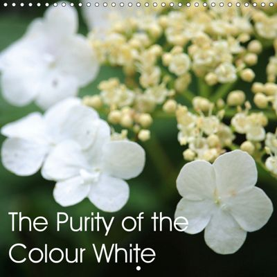 The Purity of the Colour White (Wall Calendar 2019 300 × 300 mm Square), k.A. EURIBAO