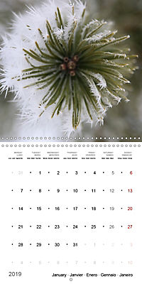 The Purity of the Colour White (Wall Calendar 2019 300 × 300 mm Square) - Produktdetailbild 1