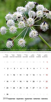 The Purity of the Colour White (Wall Calendar 2019 300 × 300 mm Square) - Produktdetailbild 9