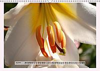 The Scent of Lilies (Wall Calendar 2019 DIN A3 Landscape) - Produktdetailbild 7