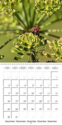 The secret World of Insects (Wall Calendar 2019 300 × 300 mm Square) - Produktdetailbild 12
