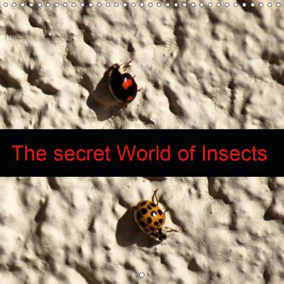 The secret World of Insects (Wall Calendar 2019 300 × 300 mm Square), kattobello