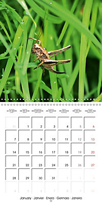 The secret World of Insects (Wall Calendar 2019 300 × 300 mm Square) - Produktdetailbild 1