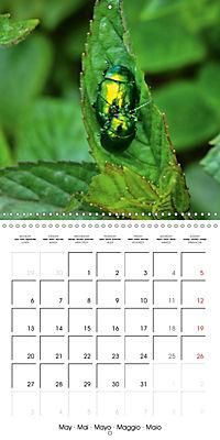 The secret World of Insects (Wall Calendar 2019 300 × 300 mm Square) - Produktdetailbild 5