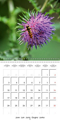 The secret World of Insects (Wall Calendar 2019 300 × 300 mm Square) - Produktdetailbild 6