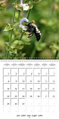 The secret World of Insects (Wall Calendar 2019 300 × 300 mm Square) - Produktdetailbild 7