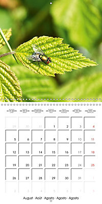 The secret World of Insects (Wall Calendar 2019 300 × 300 mm Square) - Produktdetailbild 8