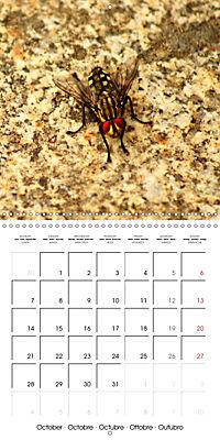 The secret World of Insects (Wall Calendar 2019 300 × 300 mm Square) - Produktdetailbild 10