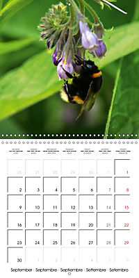 The secret World of Insects (Wall Calendar 2019 300 × 300 mm Square) - Produktdetailbild 9