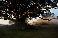 The Tree - Produktdetailbild 9
