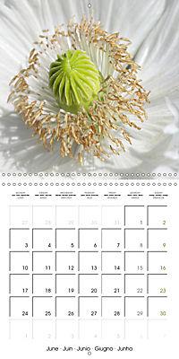 The White Garden (Wall Calendar 2019 300 × 300 mm Square) - Produktdetailbild 6