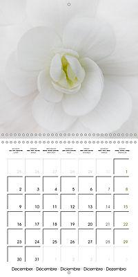 The White Garden (Wall Calendar 2019 300 × 300 mm Square) - Produktdetailbild 12