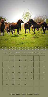 The Wild Horses of Langeland (Wall Calendar 2019 300 × 300 mm Square) - Produktdetailbild 1