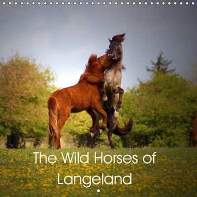 The Wild Horses of Langeland (Wall Calendar 2019 300 × 300 mm Square), Four Hands Art