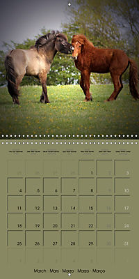 The Wild Horses of Langeland (Wall Calendar 2019 300 × 300 mm Square) - Produktdetailbild 3