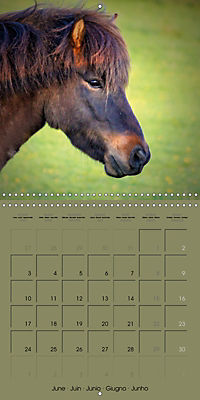 The Wild Horses of Langeland (Wall Calendar 2019 300 × 300 mm Square) - Produktdetailbild 6