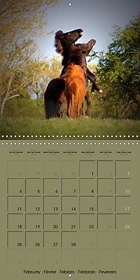 The Wild Horses of Langeland (Wall Calendar 2019 300 × 300 mm Square) - Produktdetailbild 2