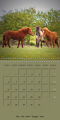 The Wild Horses of Langeland (Wall Calendar 2019 300 × 300 mm Square) - Produktdetailbild 5