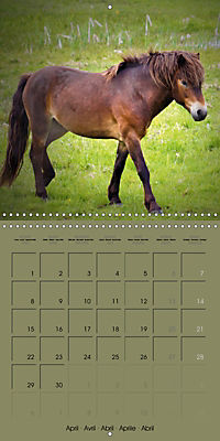 The Wild Horses of Langeland (Wall Calendar 2019 300 × 300 mm Square) - Produktdetailbild 4