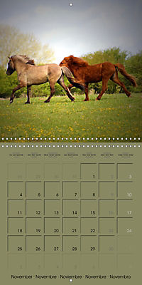 The Wild Horses of Langeland (Wall Calendar 2019 300 × 300 mm Square) - Produktdetailbild 11
